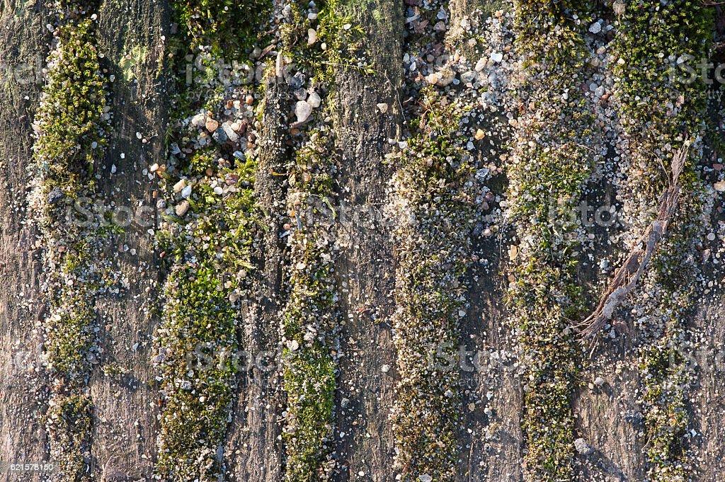 Écorce d'arbre avec de la mousse photo libre de droits