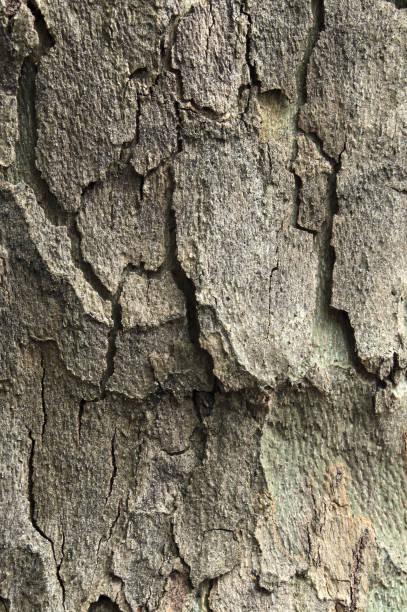 corteza de árbol para fondos - foto de stock