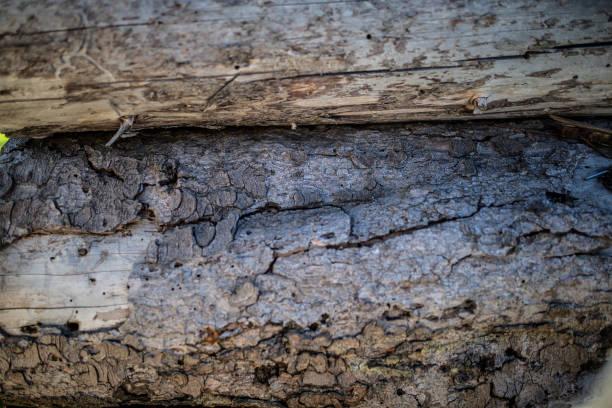 Tree bark for texture stock photo