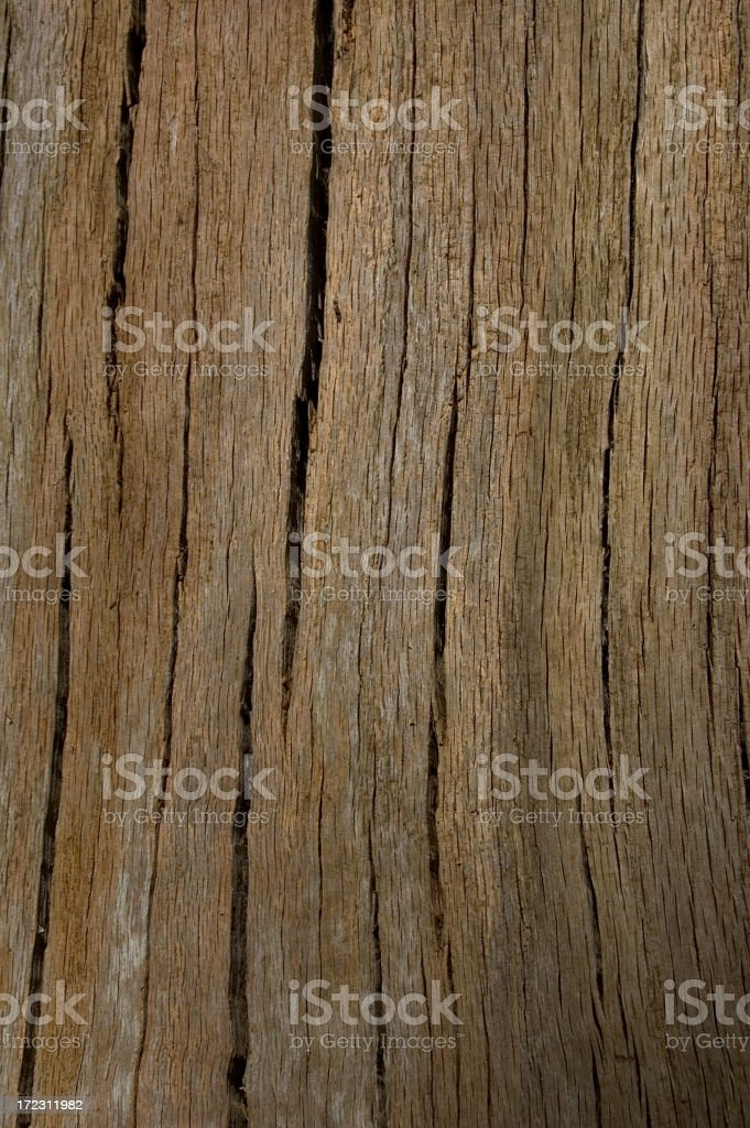 Tree Bark Lines royalty-free stock photo