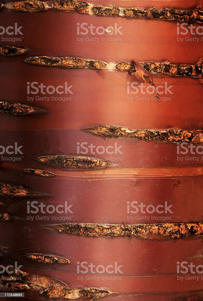 Tree Bark, Macro, Natural Pattern, Abstract, Background, Vertical royalty-free stock photo