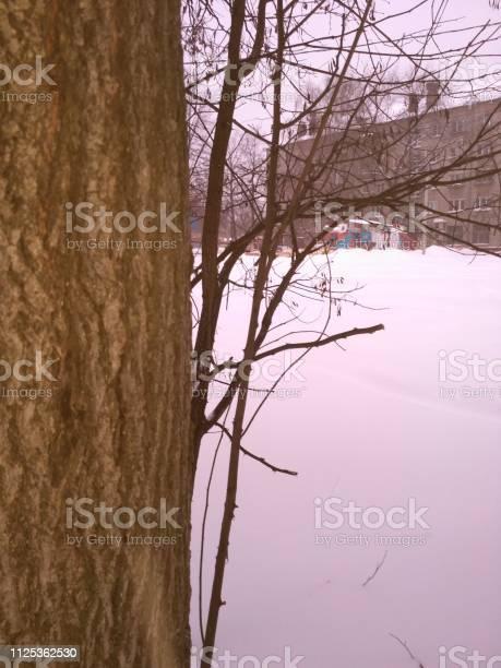 Photo of tree bark near, winter