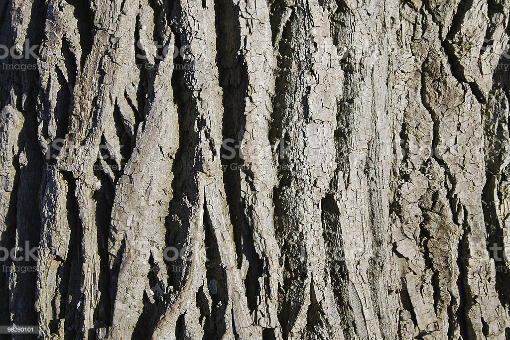 Tree Bark Patterns royalty-free stock photo