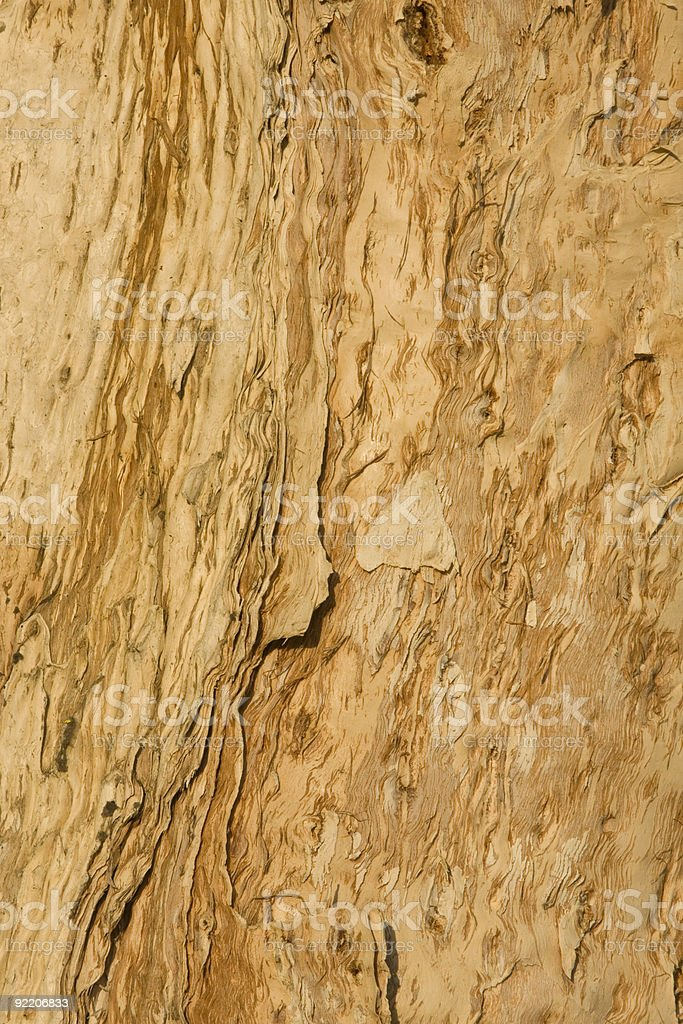 Tree Bark, Peeling, Pattern, Background, Beauty-in-Nature, Wood, Organic, Warm Tone royalty-free stock photo