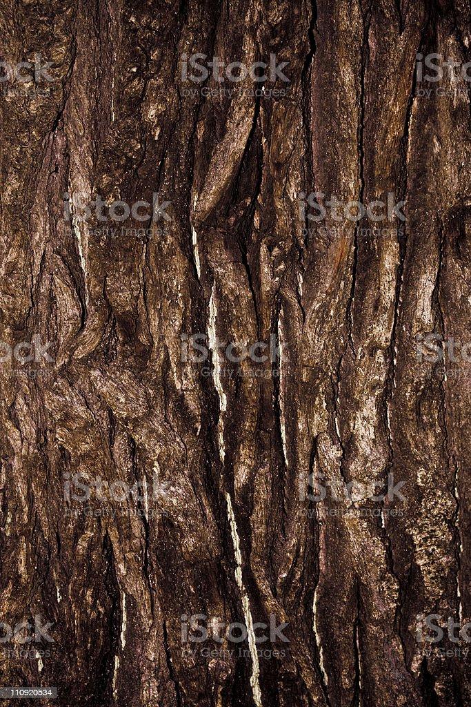 Tree Bark royalty-free stock photo
