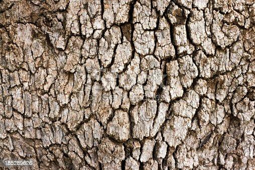 A close-up of an oak tree's bark.