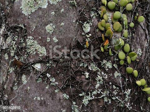 istock Tree bark 931403910