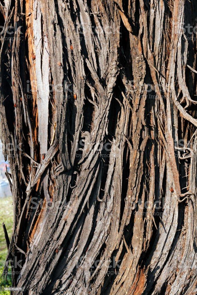 tree bark - Royalty-free Abstract Stock Photo