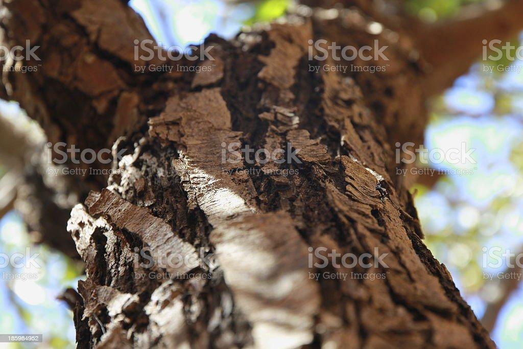 Tree bark shot in vertical royalty-free stock photo