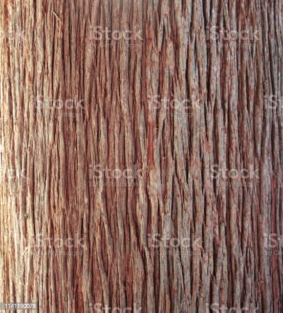 Photo of Tree bark texture