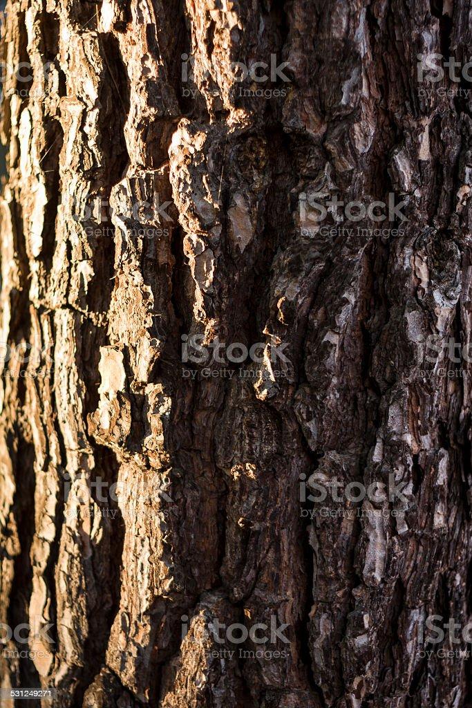 Árbol de corteza textura - foto de stock