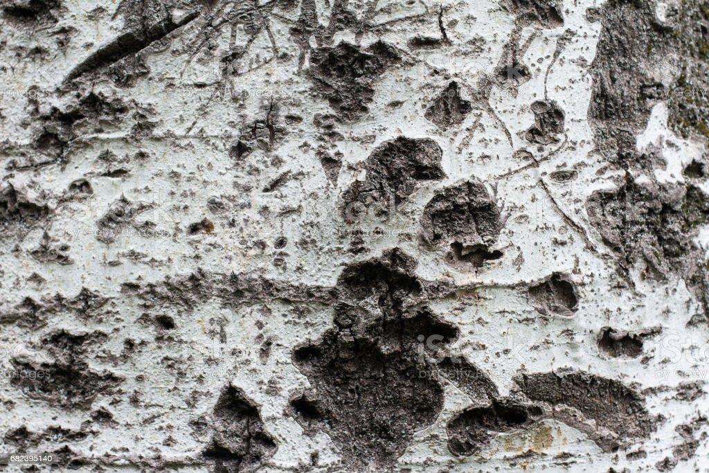 tree bark texture royalty-free stock photo