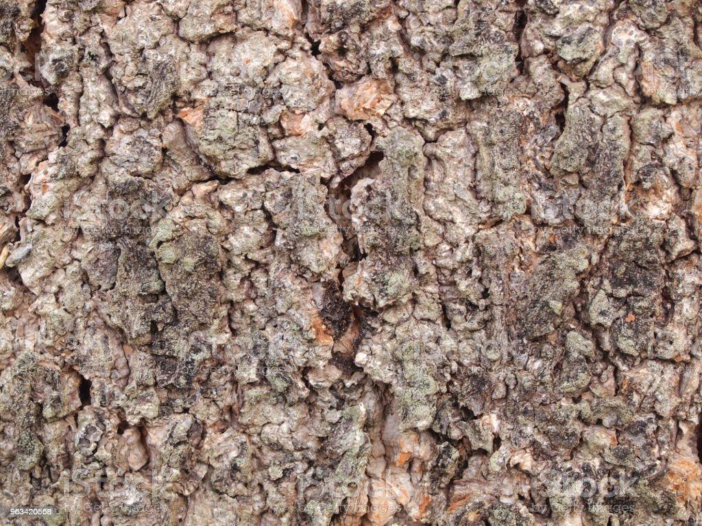 texture d'écorce d'arbre  - Photo de Abstrait libre de droits