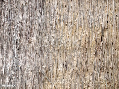 Tree Bark Texture Stock Photo & More Pictures of Antique