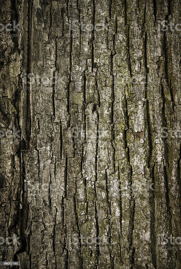 Tree bark texture royalty-free stock photo