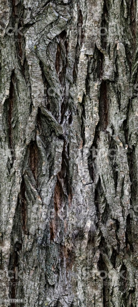 Cartoon Tree Bark Texture / Find over 100+ of the best free bark texture images.