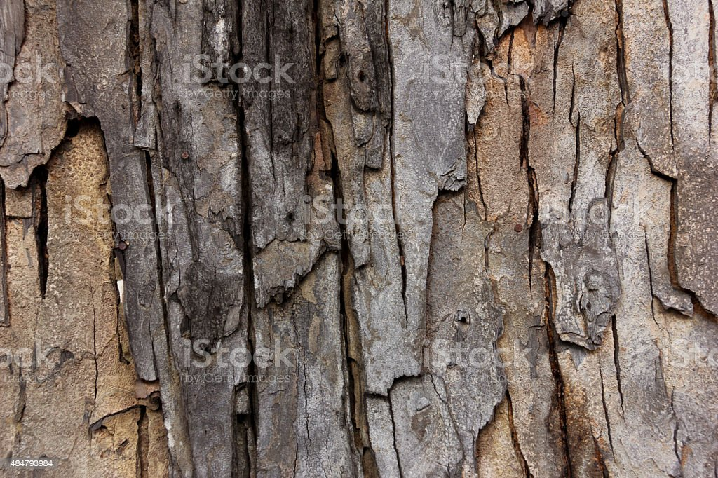 Tree bark texture wallpaper and background stock photo