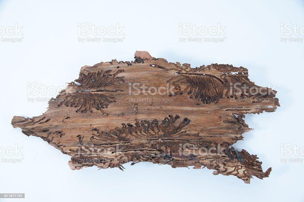 Tree bark with bark beetle traces stock photo