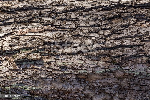 winding lines and patterns of tree bark close up. natural patterns for design and inspiration