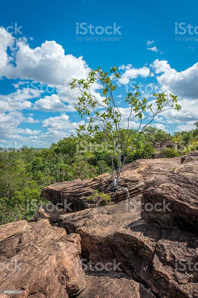 Tree between Rocks stock photo