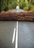 A large fallen tree blocking the road after a storm.