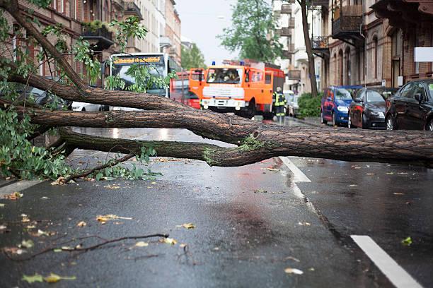 baum blocks a street - deutsche bäume stock-fotos und bilder