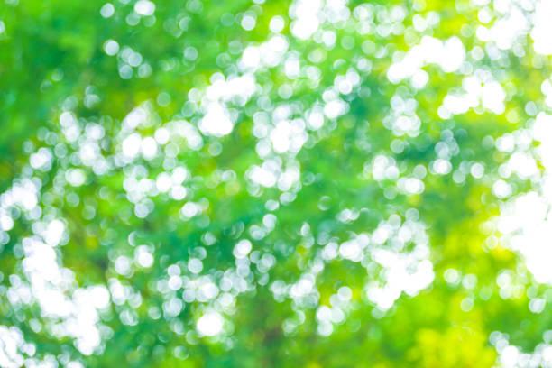 ボケ背景の木 - 木漏れ日 ストックフォトと画像