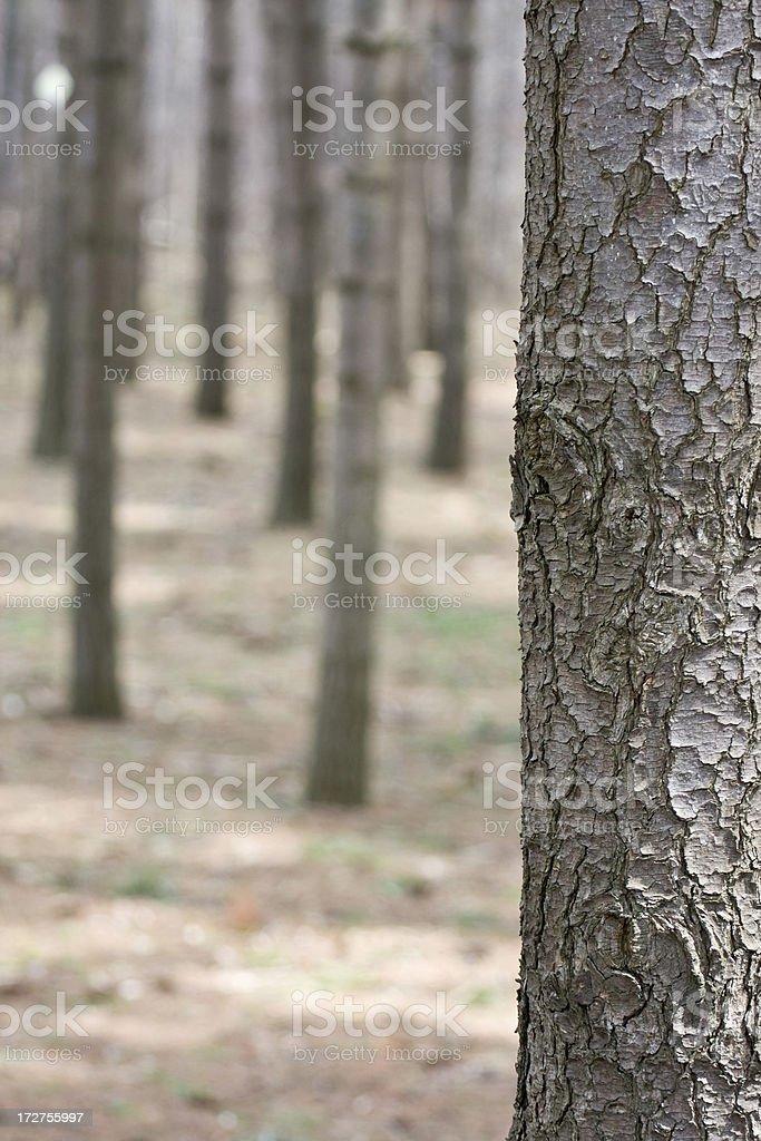Tree Border stock photo