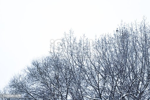 Gloomy tree braches covered with snow, shot from Zagreb, Croatia