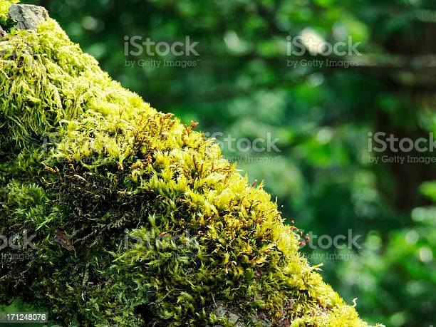 Photo of Tree Branch Covered with Green Moss