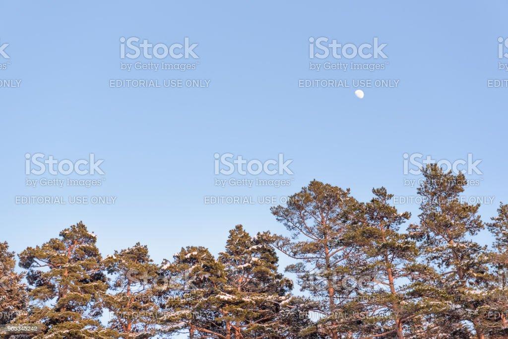 Tree branch covered with heavy snow zbiór zdjęć royalty-free