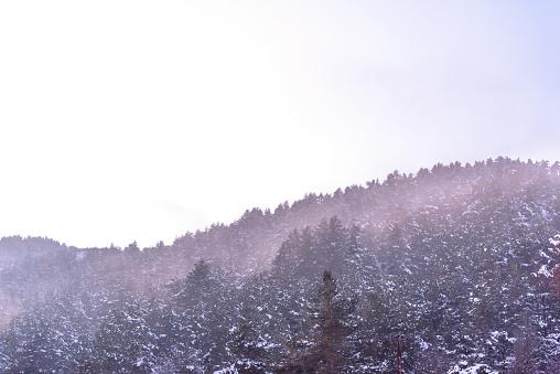 Tree Branch Covered With Heavy Snow - zdjęcia stockowe i więcej obrazów Bez ludzi