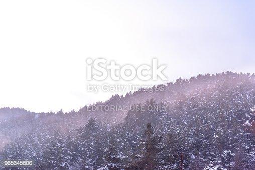 Tree Branch Covered With Heavy Snow - Stockowe zdjęcia i więcej obrazów Bez ludzi