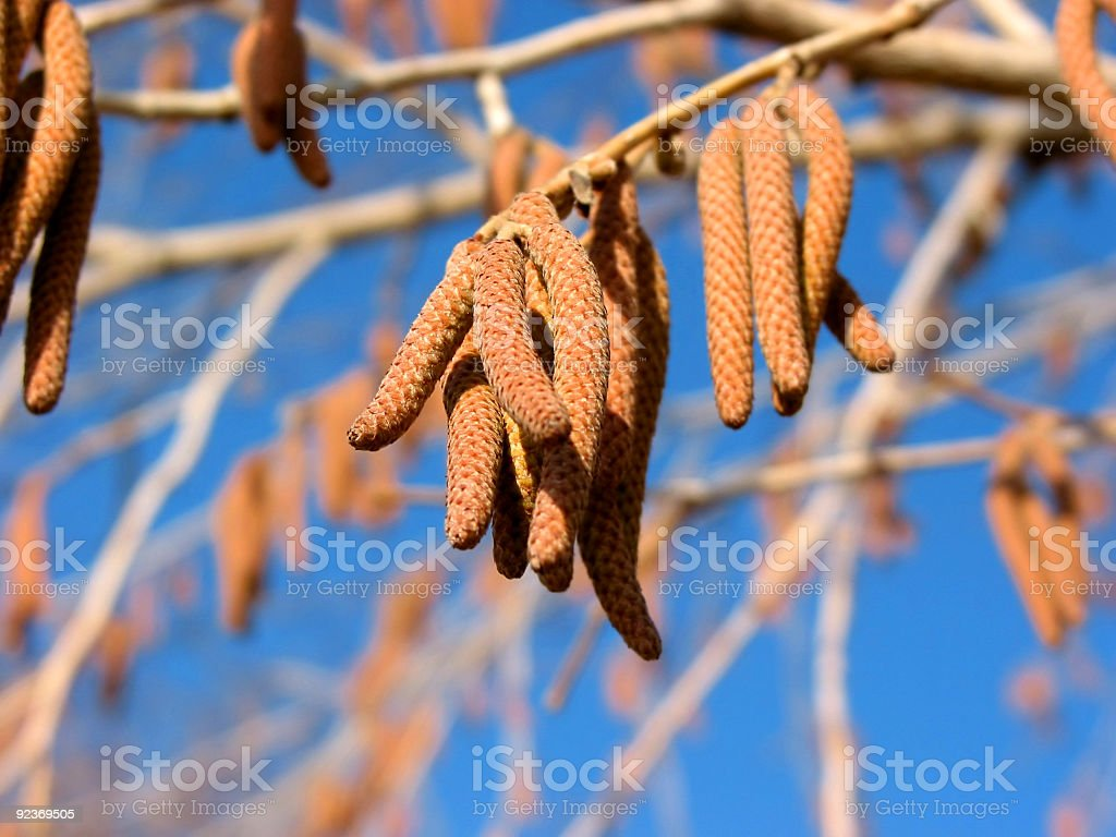 Tree branch detail royalty-free stock photo
