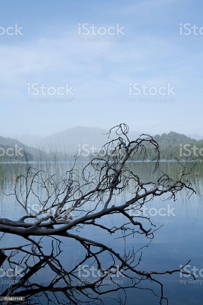 Tree branch in lake stock photo