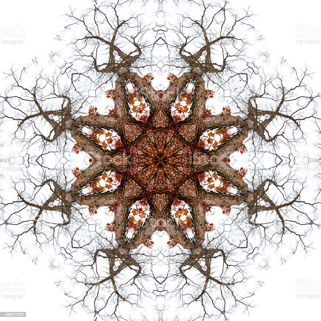 Tree Branch Kaleidoscopic Photographic Mandala Design stock photo