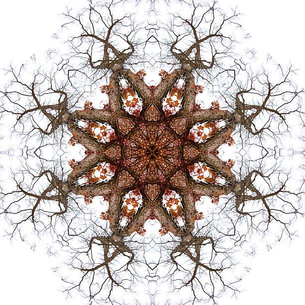 Tree Branch Kaleidoscopic Photographic Mandala Design stock photo