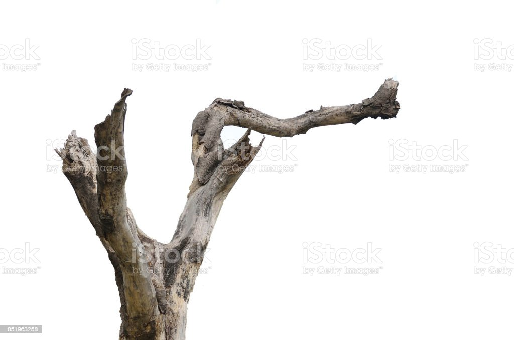 Tree branch - foto de stock