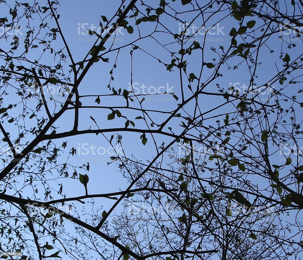 Tree Branch Silhouette royalty-free stock photo
