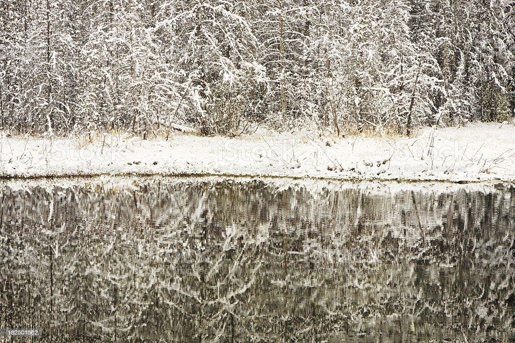 Tree Branch Snow Lake Reflection stock photo