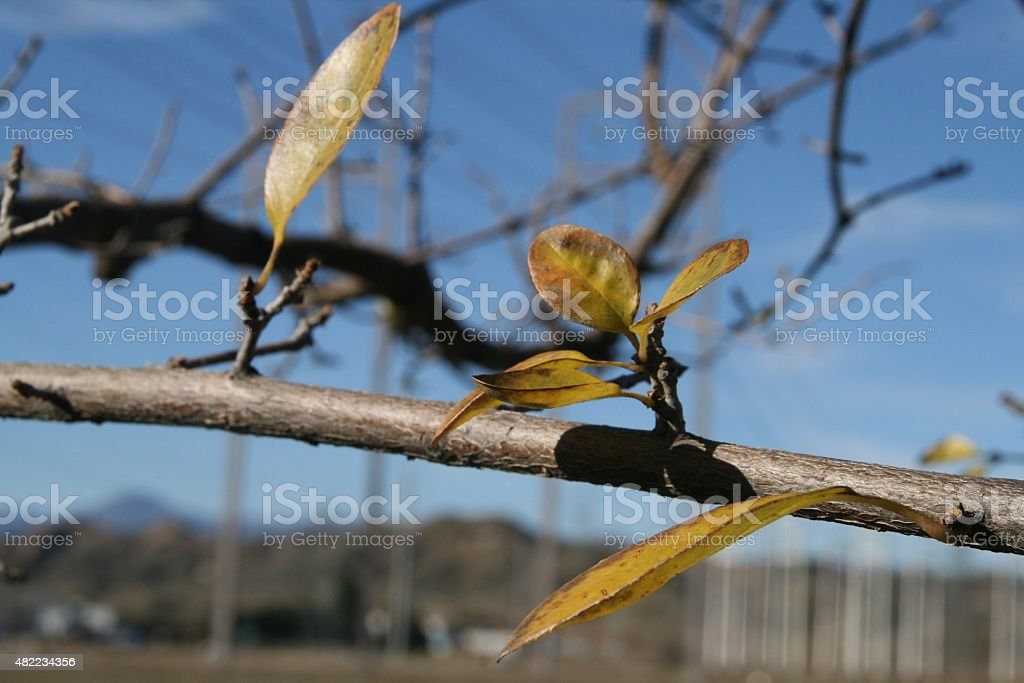 Tree Branch - Sparse stock photo