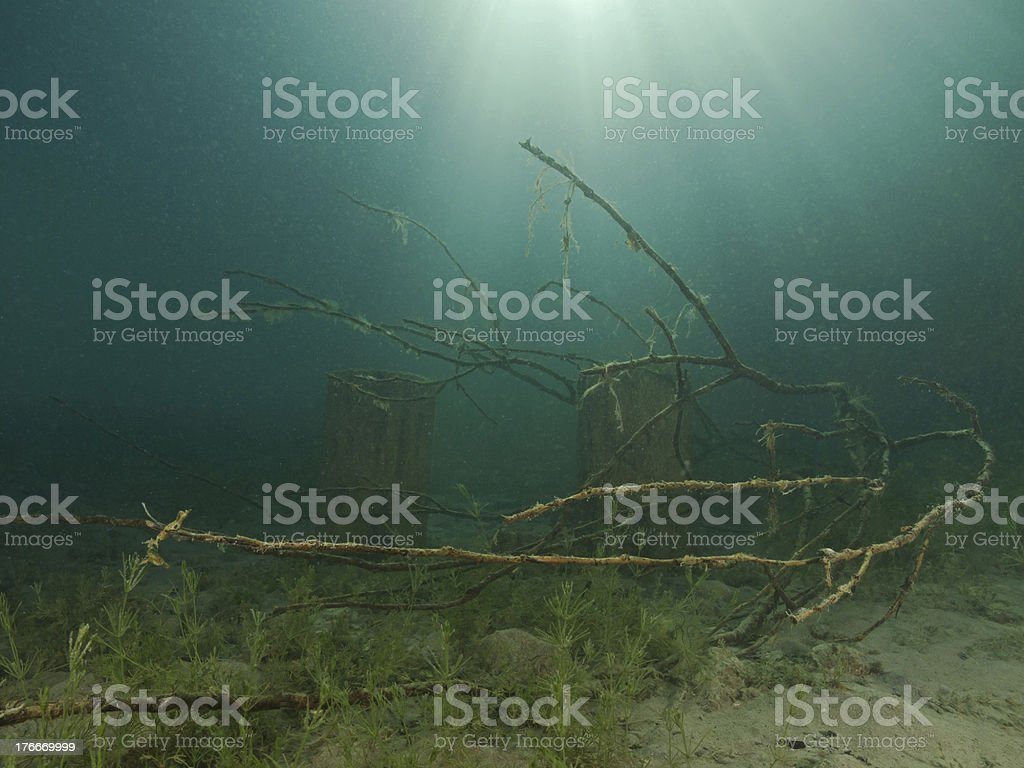 Tree branch underwater royalty-free stock photo