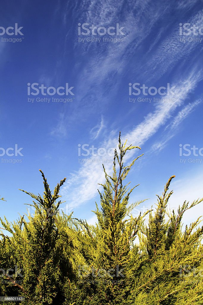 Tree Branch with Blue Sky Background royalty-free stock photo