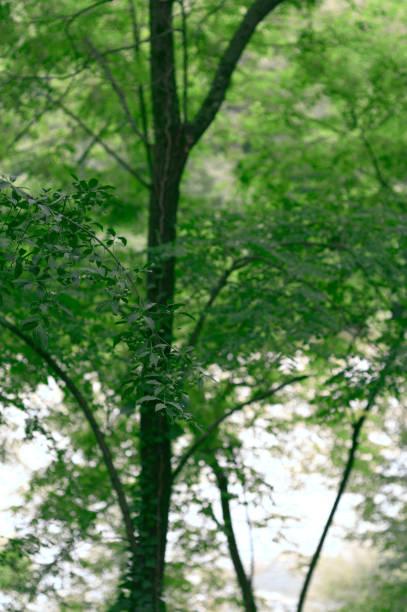rama arbórea con hojas con tronco y vegetación de fondo - foto de stock