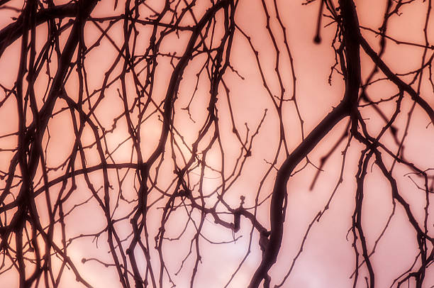 Tree Branches Against Pink Sunset Sky stock photo