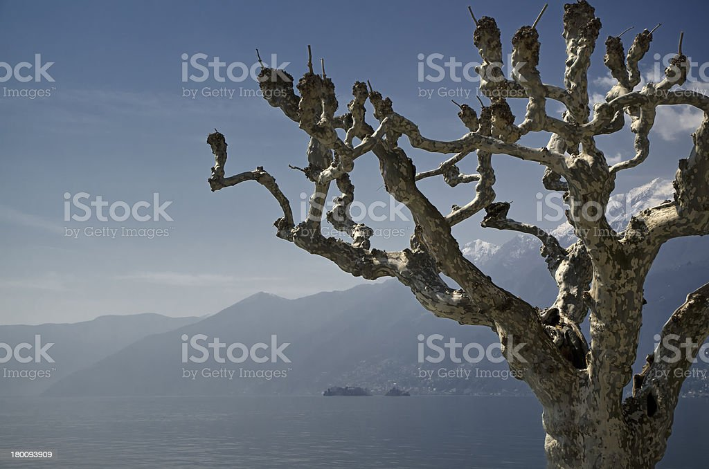 Tree branches and islands royalty-free stock photo