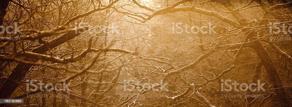 Tree branches at sunrise royalty-free stock photo