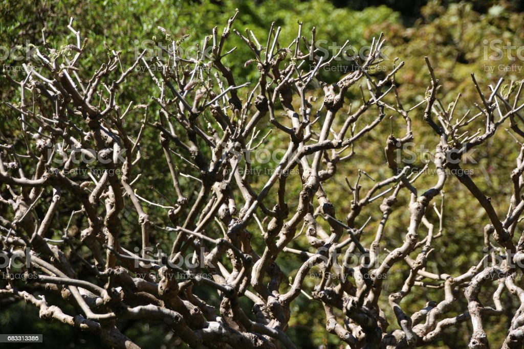 Träd grenar bakgrund royaltyfri bildbanksbilder