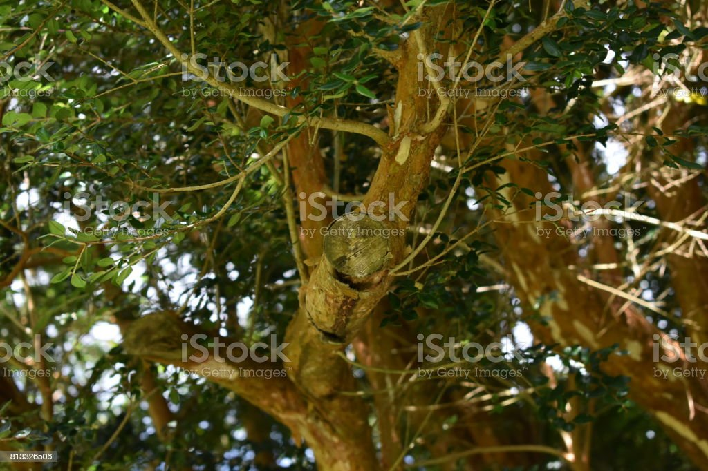 Tree Branches Close-Up stock photo