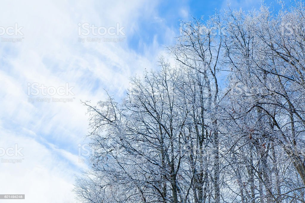 Tree branches covered with snow and look nice in winter. foto stock royalty-free
